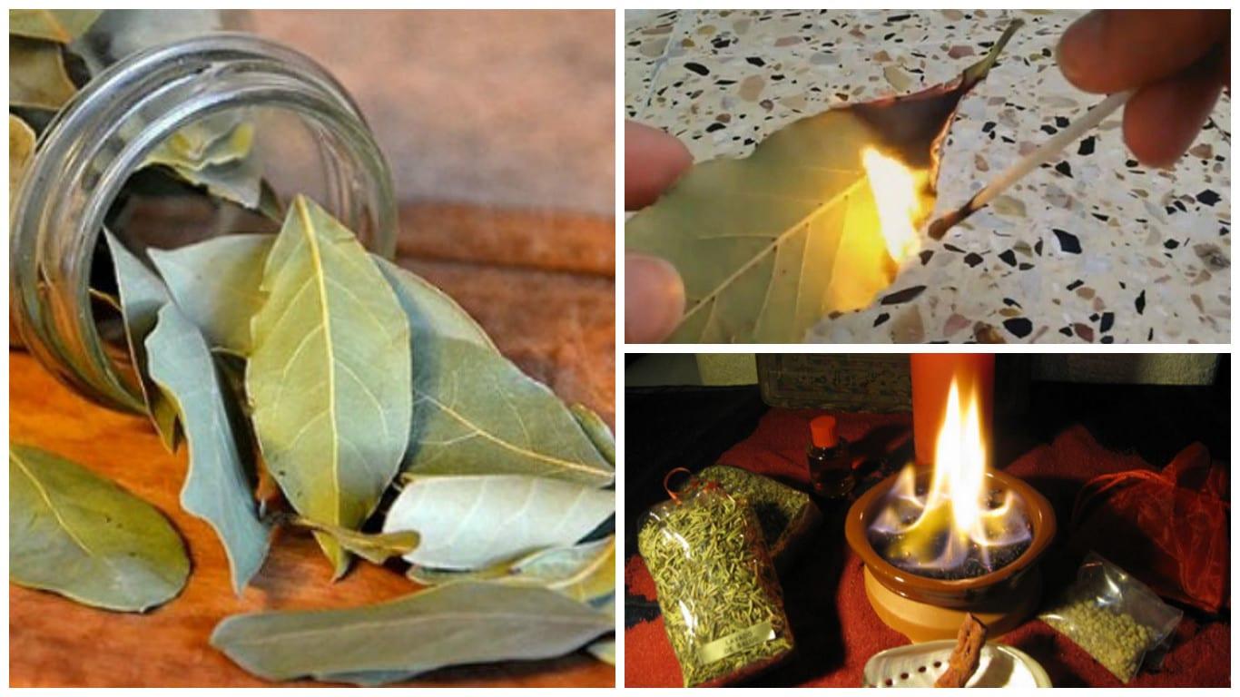 Photo of Alloro: Ecco perché dovresti bruciare le foglie di alloro in casa tua!
