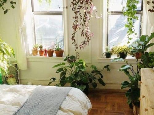 Photo of 4 Piante da mettere in camera da letto curano insonnia e apnea