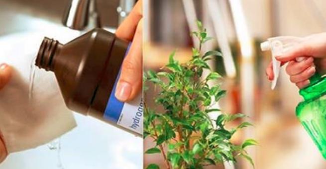 Acqua ossigenata:  Metti 1 cucchiaio alle tue piante e guarda cosa succede