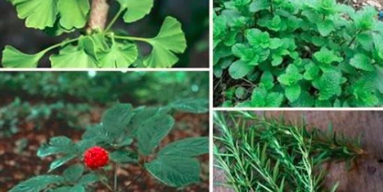 Quattro piante:Che ti prottegono dall'Alzaimer L'ansia Depressione.