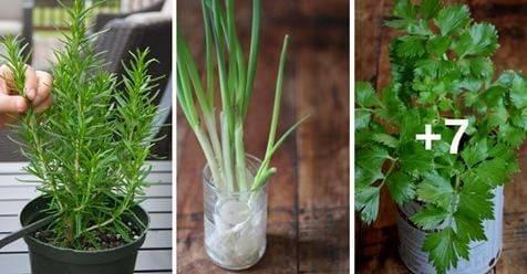 Fai da te: 10 alimenti che puoi ri-piantare in acqua per tutto l'anno.