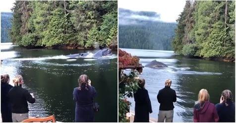 Photo of Balene: questo è veramente bello, un momento epico catturato dalla fotocamera