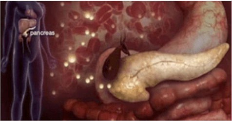 Photo of Diabete: Il digiuno intermittente aiuta a rigenerare il pancreas