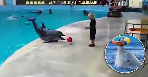Photo of Delfini: Questa volta vi presentiamo un bel video che vi farà sorridere.