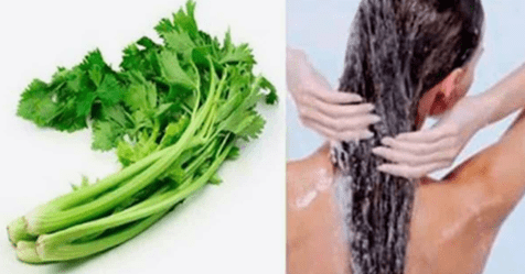 Photo of Foglie di sedano: Ecco come lisciare i tuoi capelli