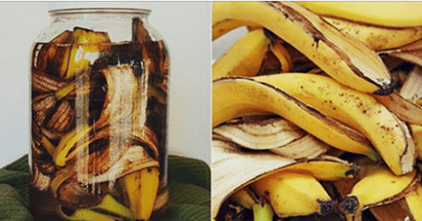 Photo of La banana: Un ottimo concime per per le tue piante