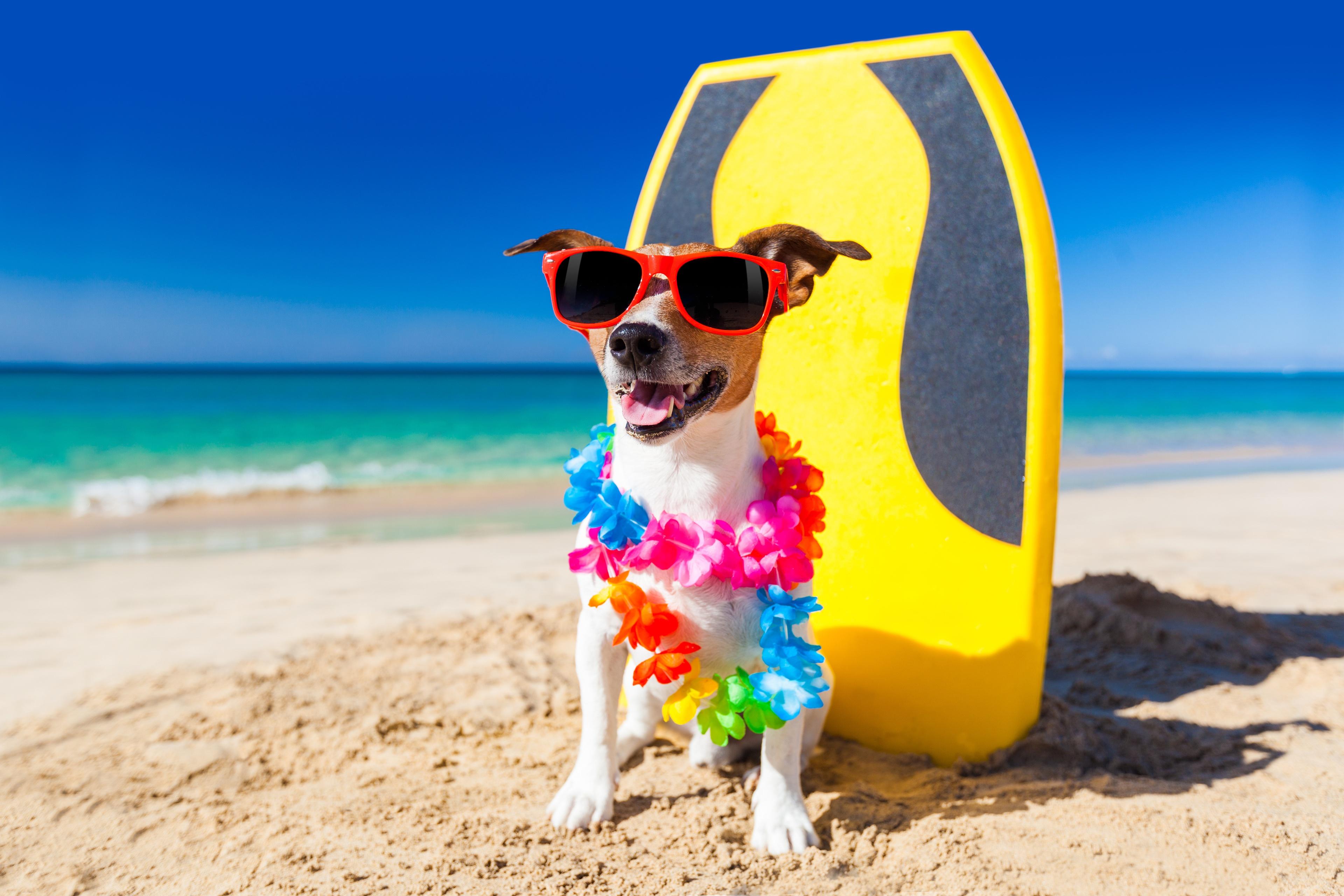 Photo of Cani in spiaggia: non si può vietare l'accesso, lo dice il Tar del Lazio