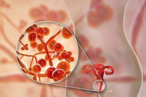 Micoplasma genitale