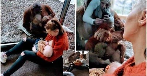 Photo of Incontro tra due madri: Incontro emozionante tra una mamma e un Orangotango