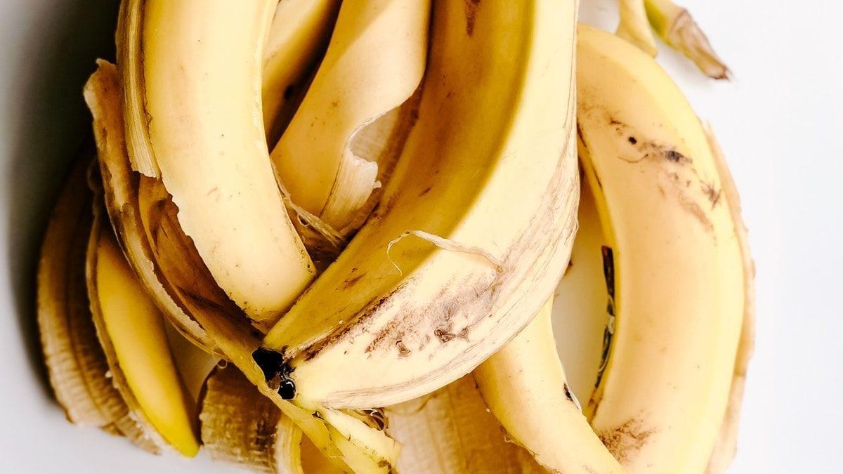 Piante grasse: Come preparare il tè alla banana, il miglior fertilizzante fatto in casa