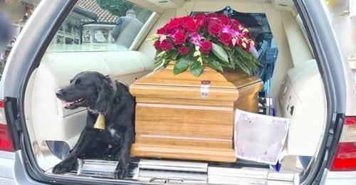 Un tenero cagnolino sale accanto al feretro del padrone deceduto e lo accompagna nel suo ultimo viaggio terreno